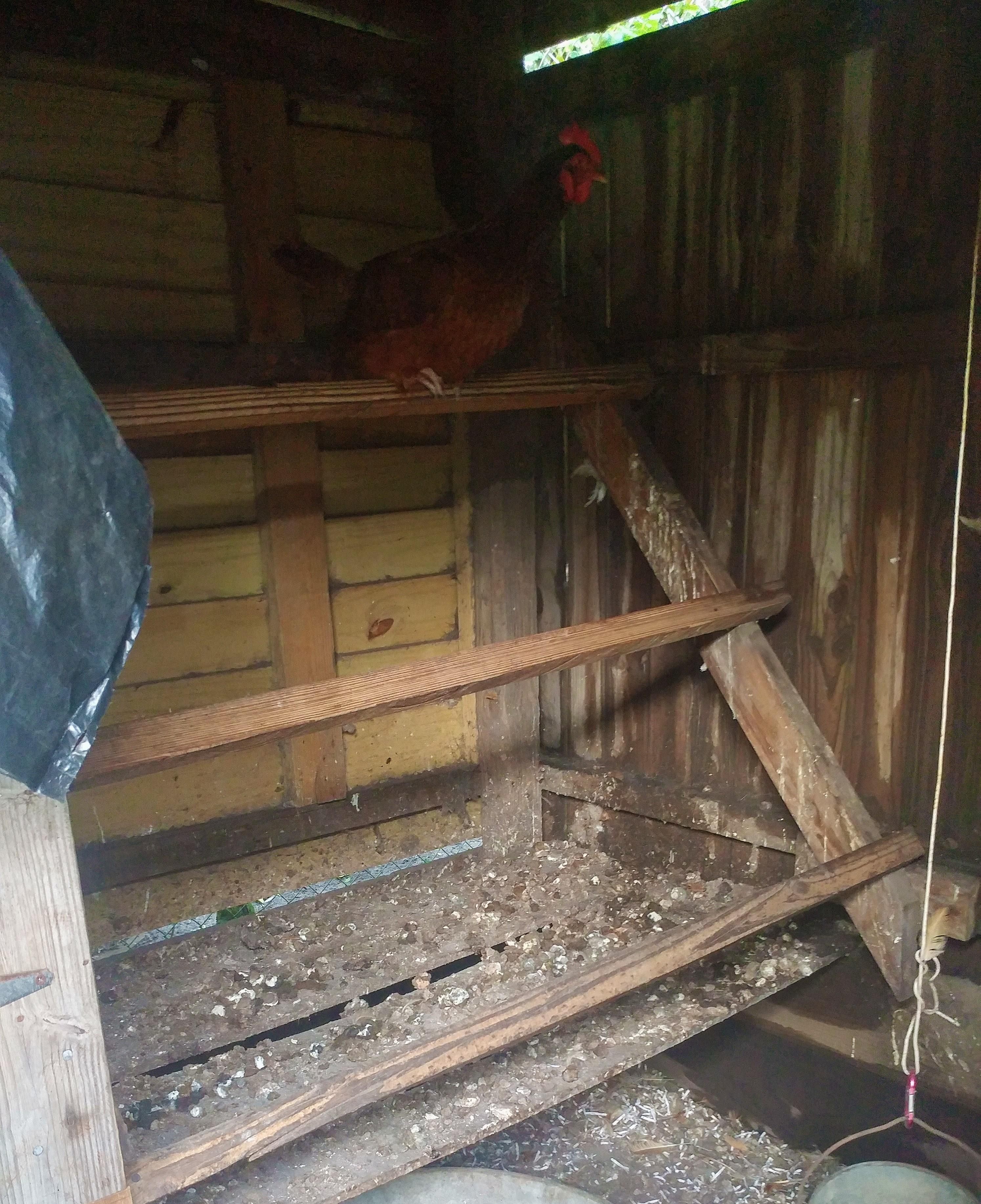 homedabbler chicken coop
