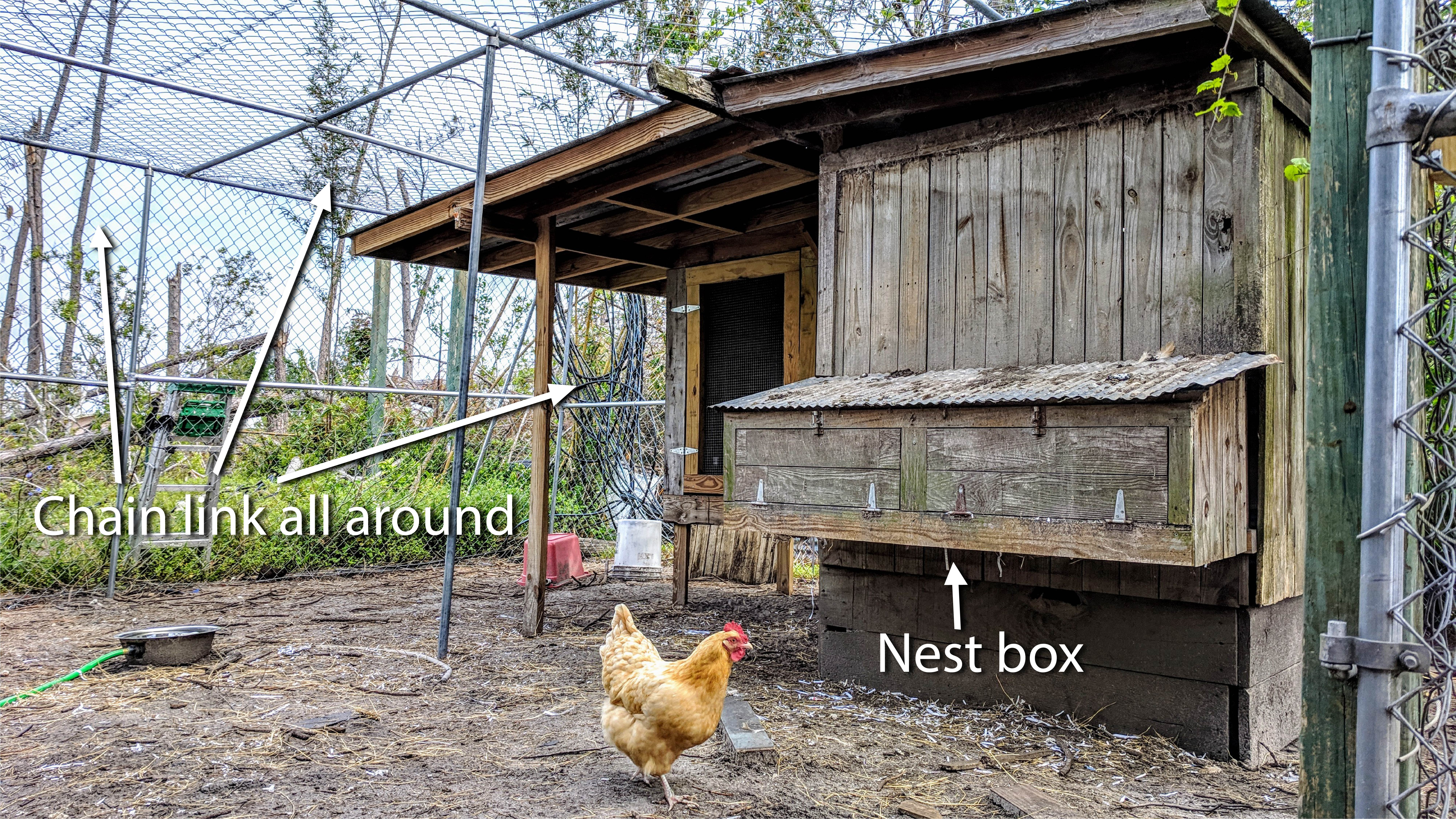 Coop Chain Link_Nest Box