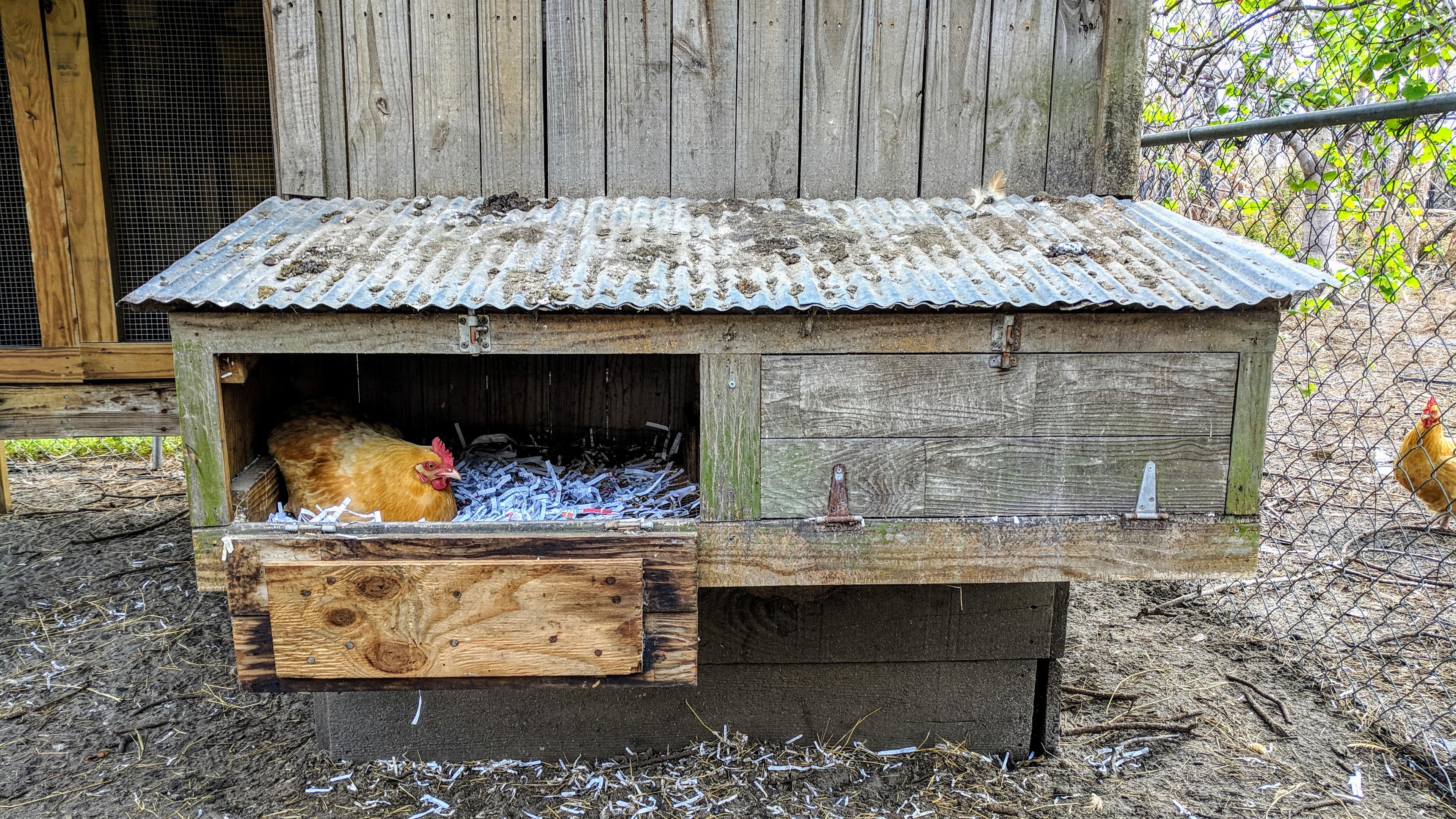 HomeDabbler.com how to build a chicken nest box
