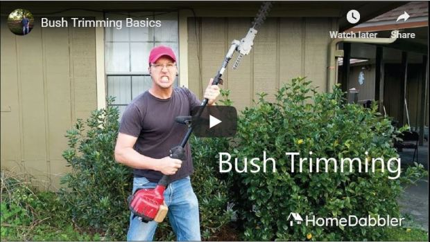 Bush Trimming Basics